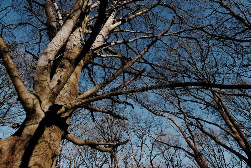 Bare tree and blue sky. royalty free stock photos