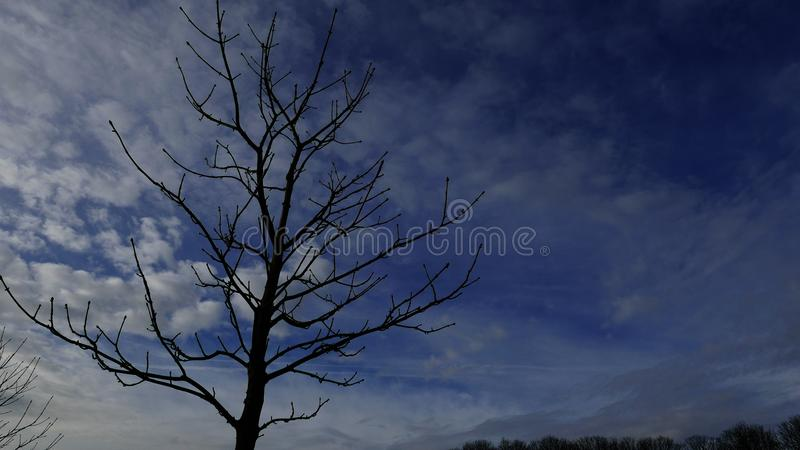 Bare tree. stock images