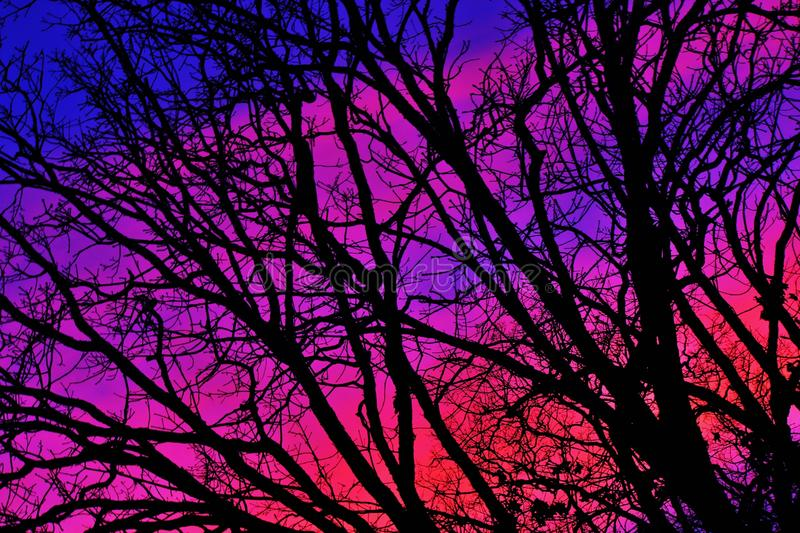 Bare tree branch. Against beautiful sky after sunset stock photo