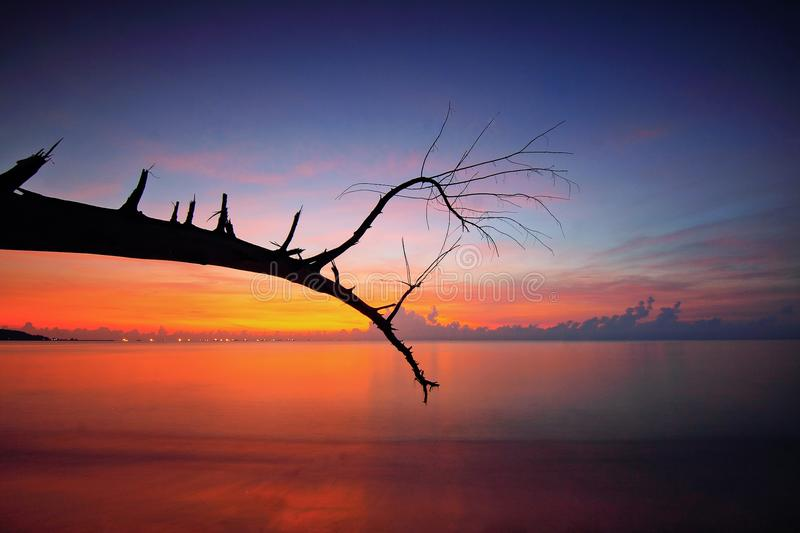 Bare Tree Branch Near Body Of Water During Sunset royalty free stock images