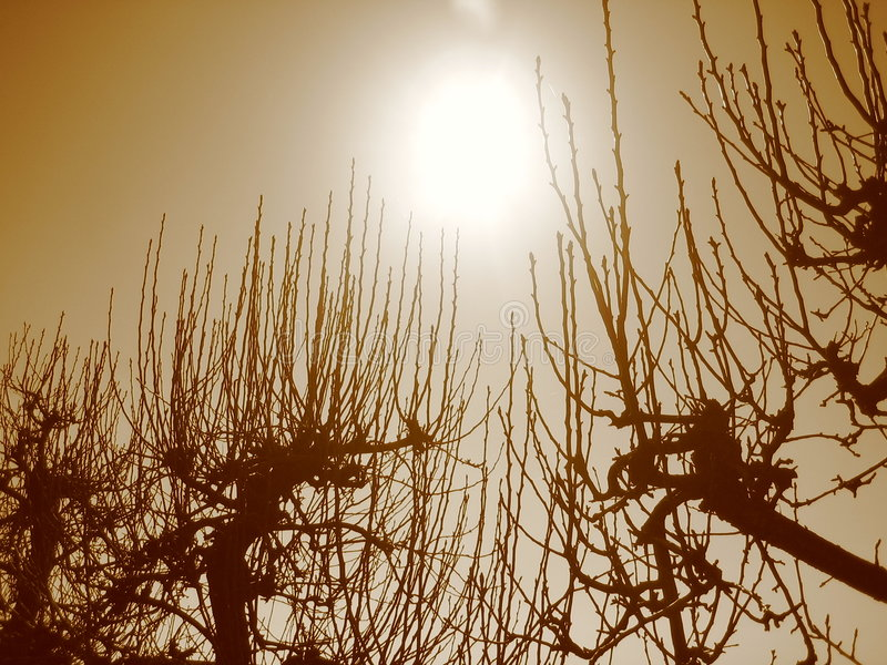 Bare tree branches. Reaching to the spring sun in a sepia tone stock photography