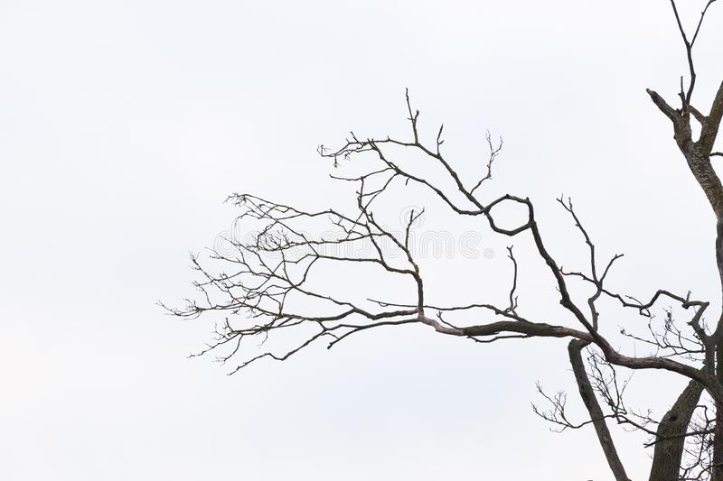 Bare tree branches stock image