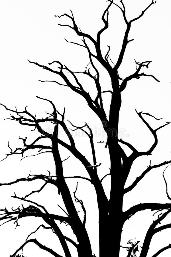 Bare Tree Branches. Black and white bare tree branches stock photo