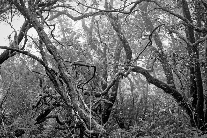 Bare tree branches in a dense forest as a black and white photo stock image