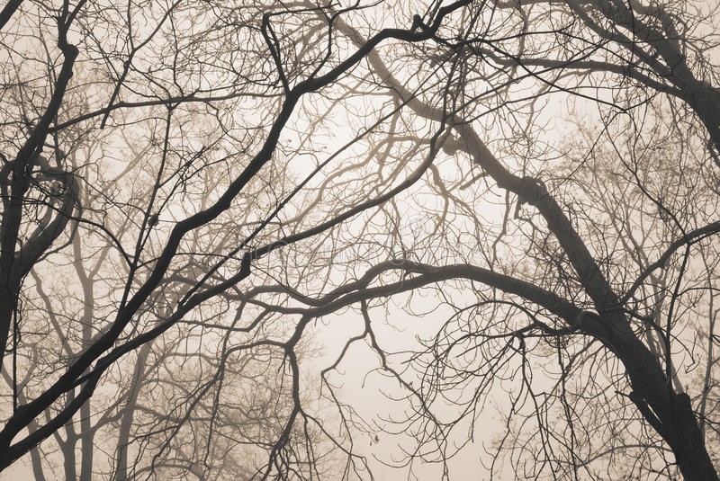Bare tree branches. In fog and sepia tone royalty free stock photography