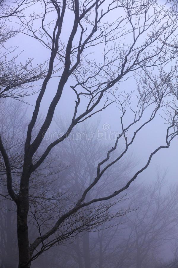 Silhouette of a tree against the backdrop of heavy fog in early spring stock image