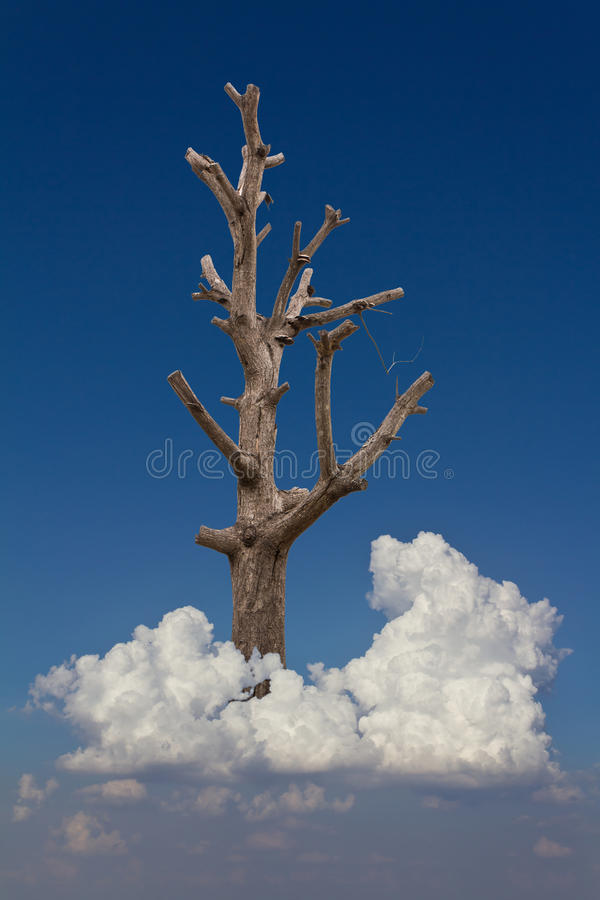 Bare tree on a cloud. royalty free stock photo