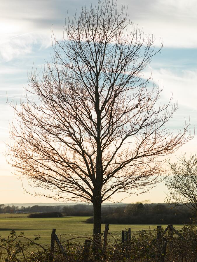 A bare tree on the edge of a pasture on a snowless winter evening. A bare tree on the edge of a pasture on a snowless, dry winter evening stock photo