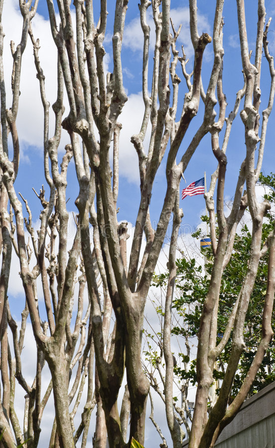 Download Bare Tree With The Flag Behind Stock Image - Image: 5010831