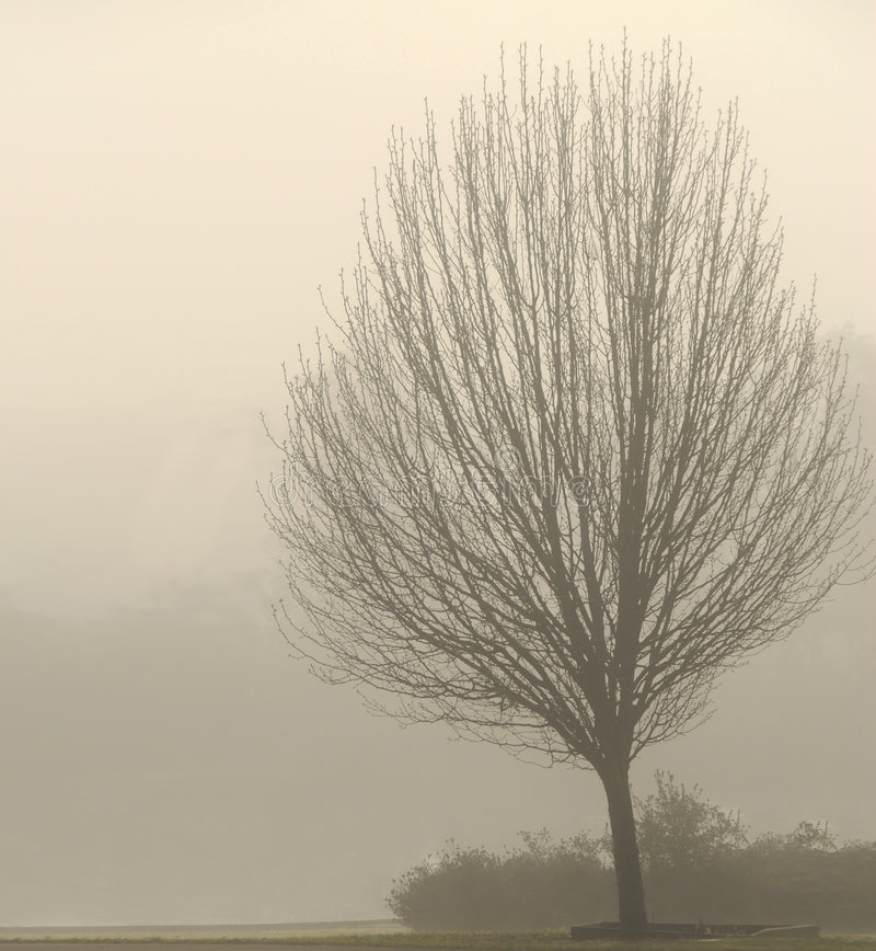 Bare Tree in Fog stock images