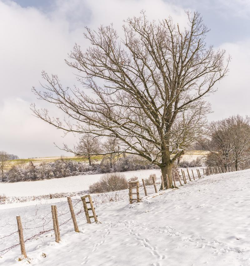 Bare Tree With Ground Covered by Snow stock photo