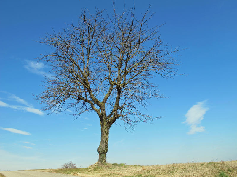 Bare tree isolated on the Hill royalty free stock photography