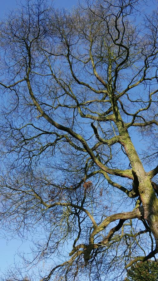 Bare tree in march. stock photo