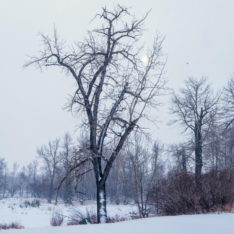 A bare tree in the middle of winter on a cold bleak day stock image
