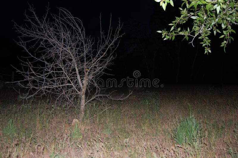 Bare Tree at Night stock photos