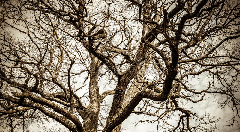 Bare tree stock images