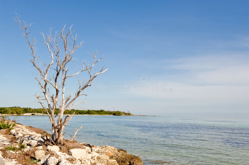 Download Bare tree and ocean stock photo. Image of rocks, outdoor - 9115860