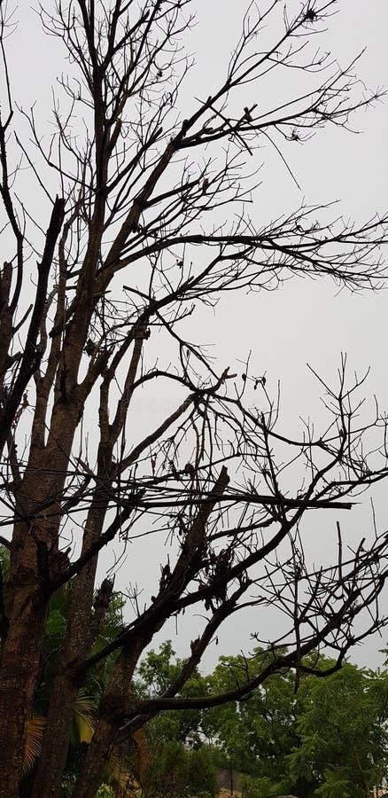Bare tree stock image