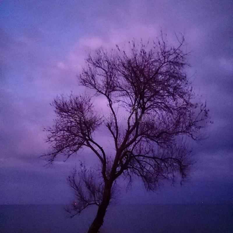 Bare tree in purple landscape royalty free stock photo