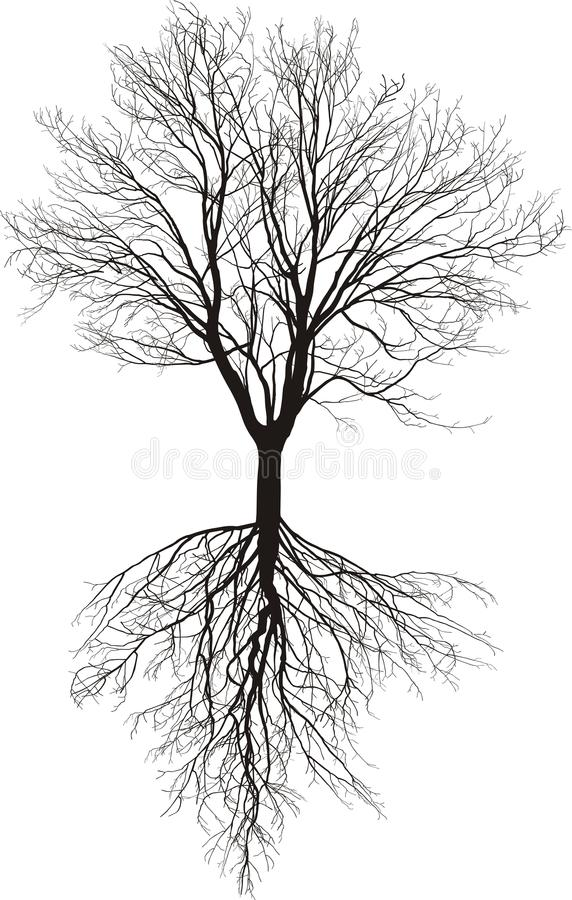 Bare tree with roots vector illustration
