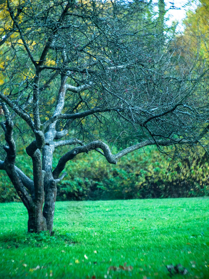 Bare tree stands in a clearing royalty free stock photo