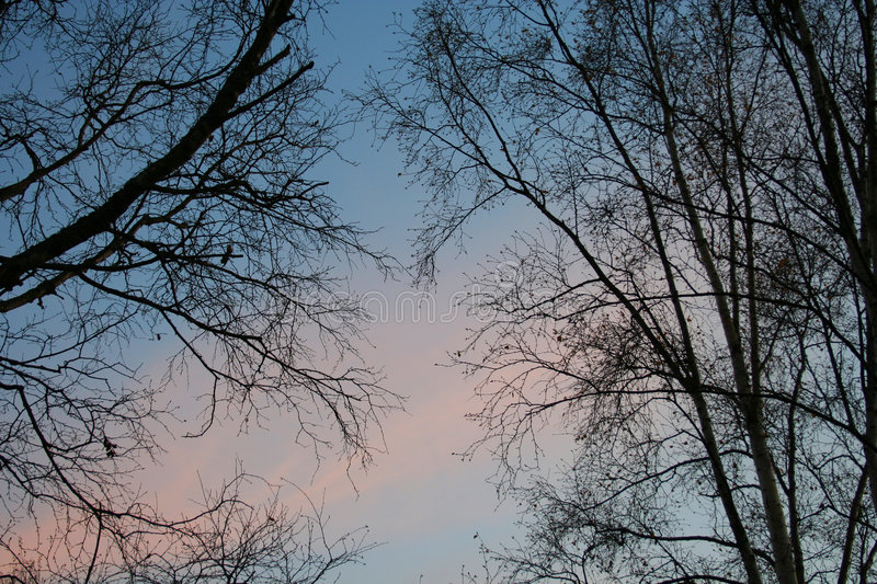 Bare tree at sunset royalty free stock image