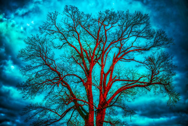 Bare tree, dramatic cloudy sky. Bare tree at sunset orange light, blue dramatic cloudy sky stock photo