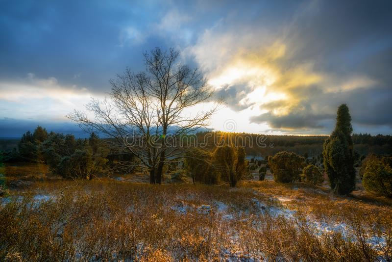 Bare Tree Surrounded by Green Tree during Sunrise royalty free stock images