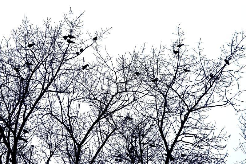 Bare tree tops wiht birds, isolated on white stock photo