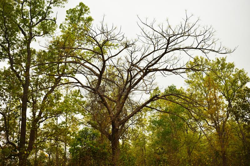 the bare tree under the grey clouds royalty free stock photos