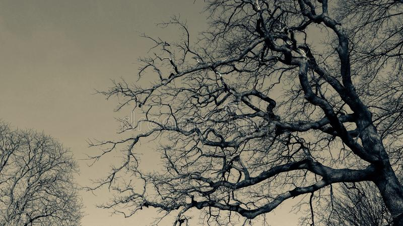 Bare tree in winter. stock photography