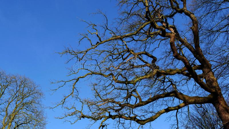 Bare tree in winter. royalty free stock photos