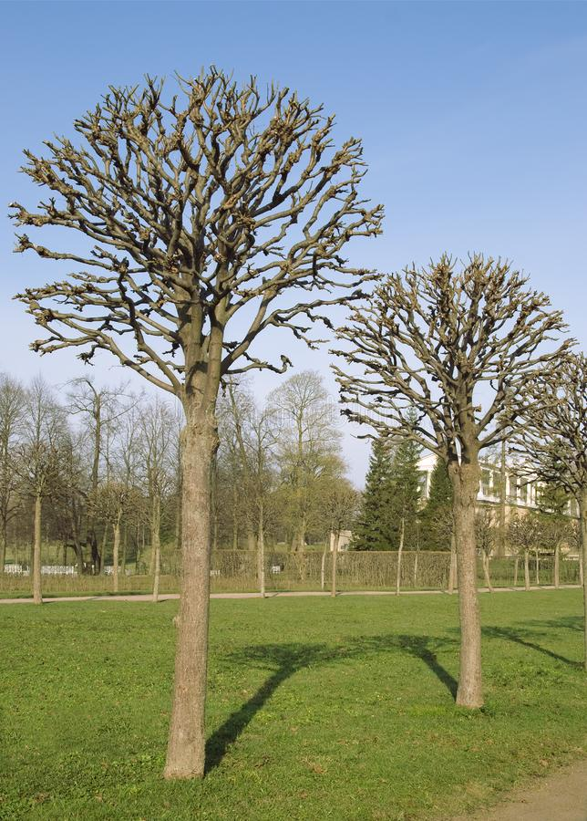 Download Bare trees stock photo. Image of tree, deciduous, leafless - 13628194