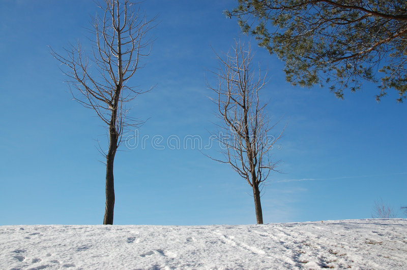 Download Bare trees stock photo. Image of cold, alone, frozen, clear - 2184328