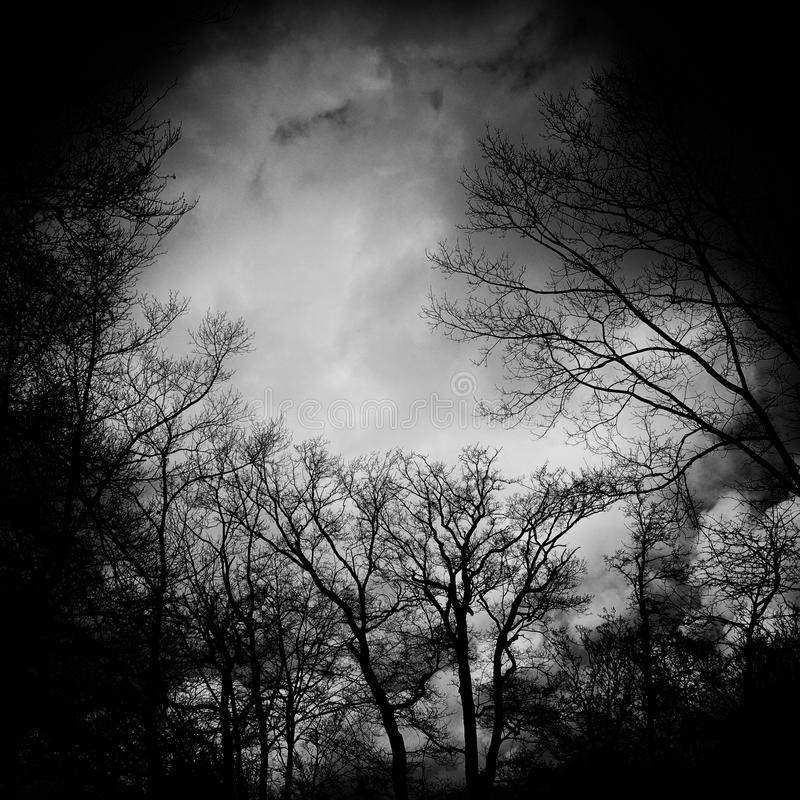 Bare Trees In Greyscale Free Public Domain Cc0 Image