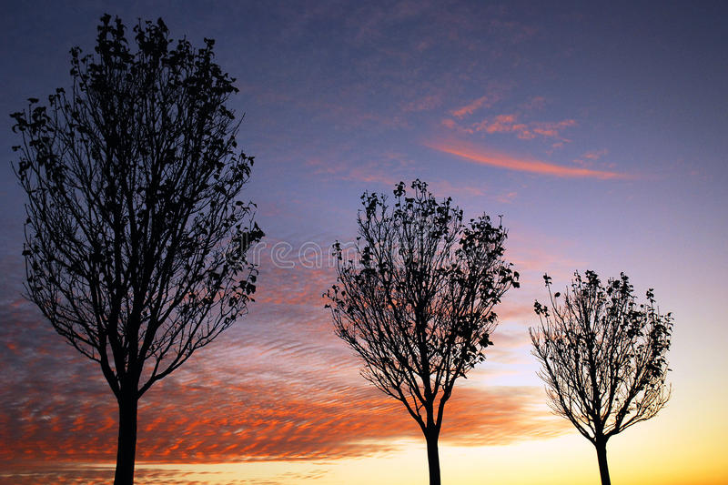 Bare trees in a late Autumn Sunset. Bare Trees are silhouetted against a blazing sunset royalty free stock images