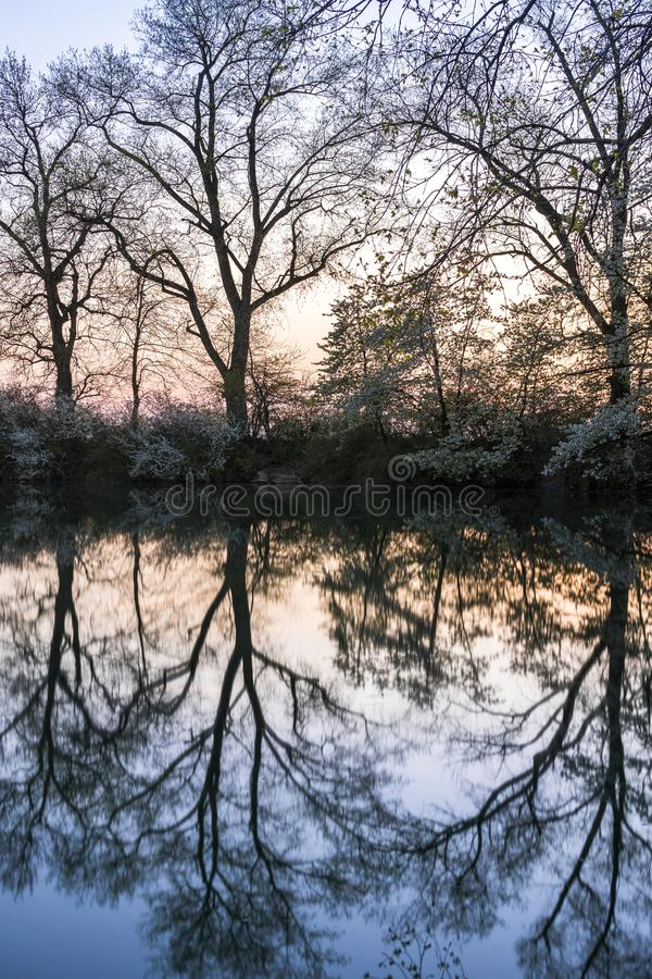 Bare Trees Near Grey Calm Body of Water at Daytime stock photos