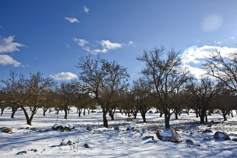 Bare Trees over Snow Ground Under Blue Cloudy Sky royalty free stock photo