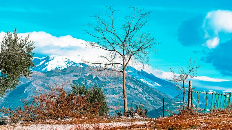 Bare trees against scenic winter mountain landscape stock photos
