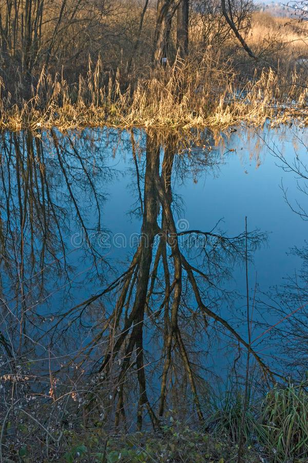 The bare trees on a winter day are reflected in the waters of th. E lake stock images