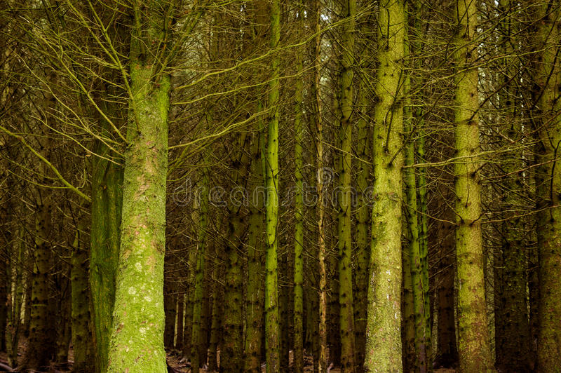 Bare trees in woodland stock photos