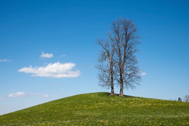 Bare vände mot träd som står på en grön kulle arkivbilder