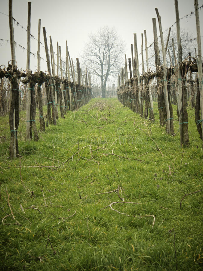 Download Bare vineyards stock photo. Image of concept, field, bare - 23750468