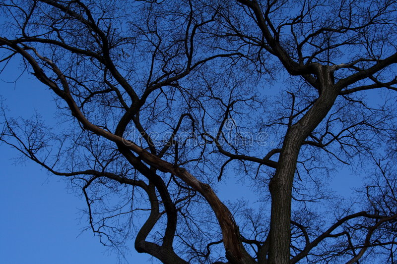 Bare Winter Tree royalty free stock images
