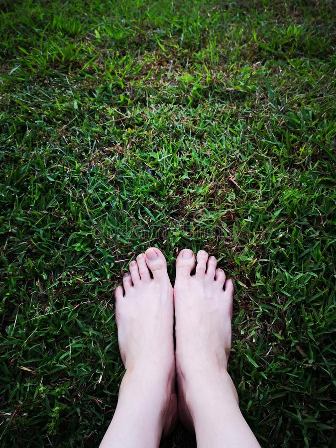 Bare Woman i`s Feet on The Green Grass. Copy Space. Close Up of Feet on a Ground Grass Background stock image