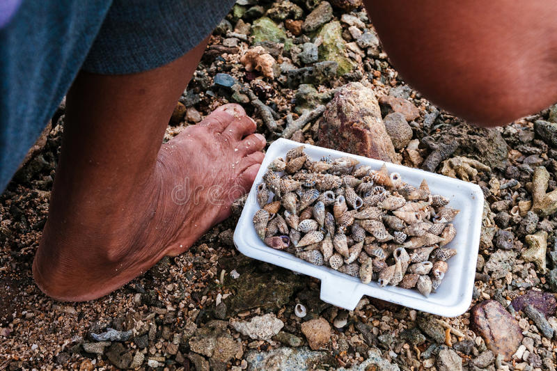 Barefoot fishermen and conch stock photo