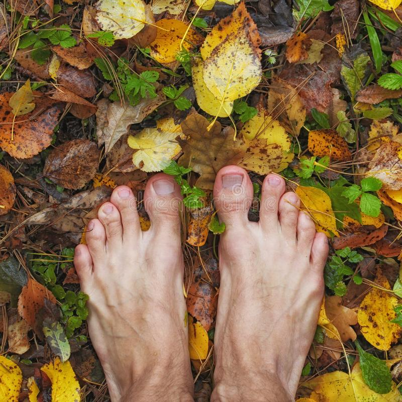 barefoot man stands on wet colored autumn foliage, square frame, top view, closeup of feet stock photography