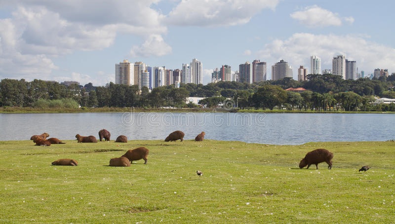 Barigui公园 免版税库存照片