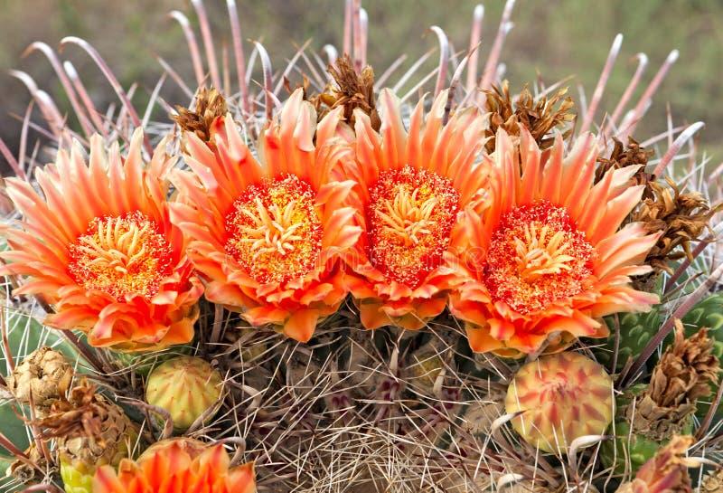 Baril de l'Arizona images stock