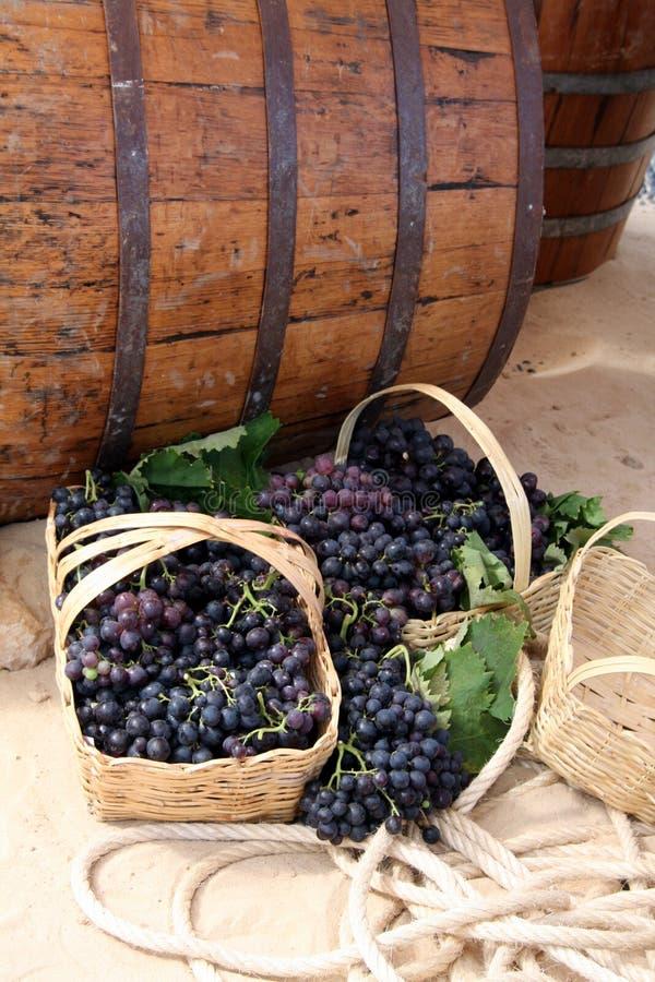 Barilotti di vino e cestini dell'uva fotografia stock libera da diritti